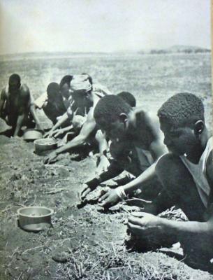 Οι εργάτες κατάφεραν να αποψιλώσουν και να καλλιεργήσουν μόνο ένα μικρό κομμάτι γης, περίπου 40 τετραγωνικών χιλιομέτρων. Ωστόσο, το έδαφος, αν και γόνιμο, ήταν πάρα πολύ σκληρό....