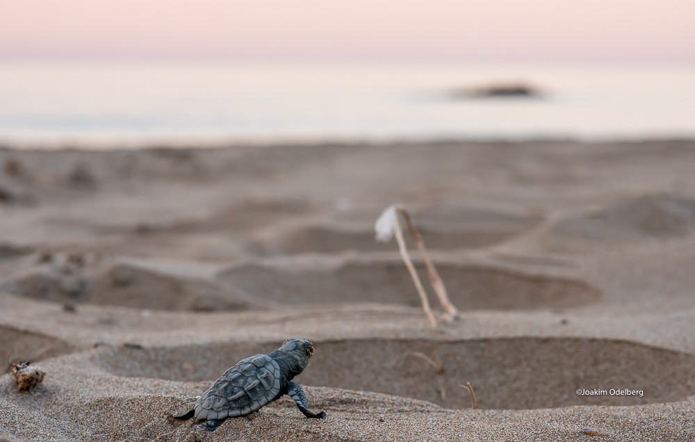 ©Joakim Odelberg - WWF Greece