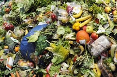 web-food-waste-getty