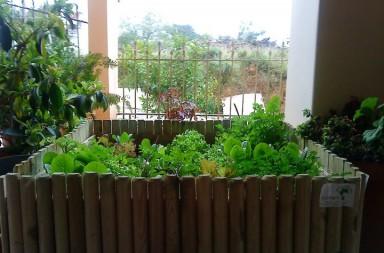 λαχανοκηπος-2