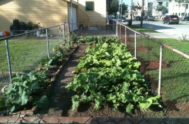 urban-vegetable-gardening-2