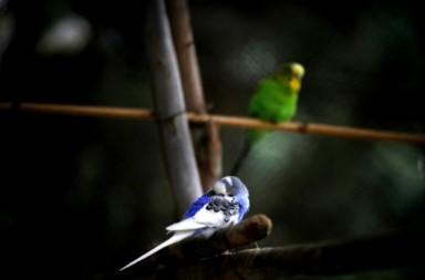 ehnikos-kipos-papagaloi-630